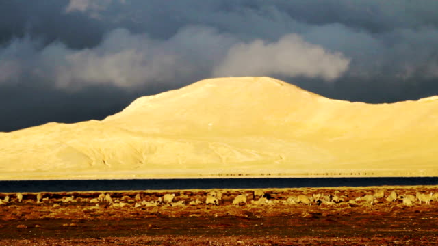 lake and mountain, Siling Lake, tibet video