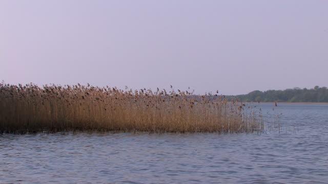 湖とリード/籐 hd - 湿地草点の映像素材/bロール