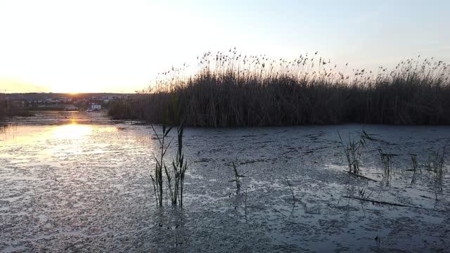 lake and reeds at sunset