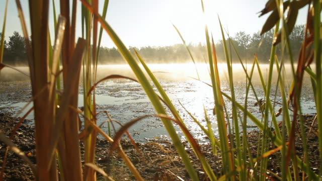 stockvideo's en b-roll-footage met hd: lake in morning - broek
