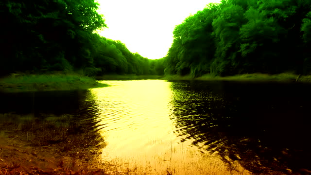 Lake in the Forest video