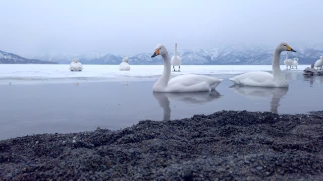 lake kussharo, hokkaido, japan. - akan nationalpark bildbanksvideor och videomaterial från bakom kulisserna