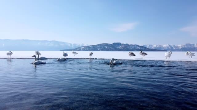 sjön kussharo, hokkaido, japan. - akan nationalpark bildbanksvideor och videomaterial från bakom kulisserna