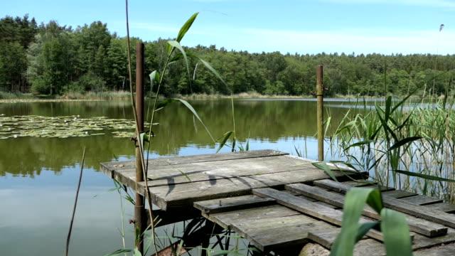see nennt trintsee im havelland. landschaft im sommer mit schilf und wald um. - schilf stock-videos und b-roll-filmmaterial
