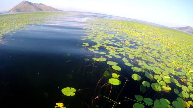 Lake Skadar. Montenegro video