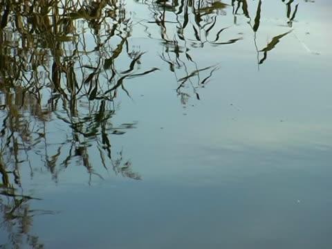 stockvideo's en b-roll-footage met lake surface - natuurgrond