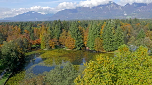 AERIAL Lake surrounded by a forest with mountains in the background video