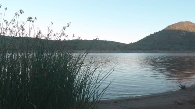lago - acqua dolce video stock e b–roll