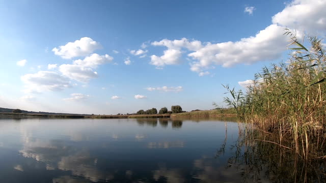 Lake water under a blue sky on a calm day Lake water under a blue sky on a calm day. Back sun. Summer landscape. Slow motion duckweed stock videos & royalty-free footage