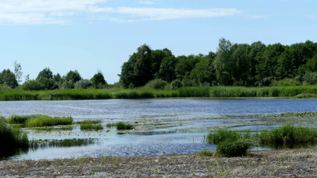 lake with swampy shores