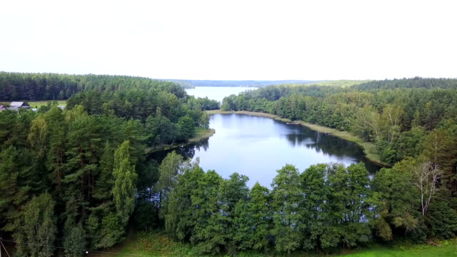 Lakes is surrounded by forests from the height of bird flight. Aerial survey video