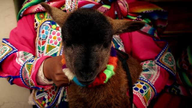 agnello tenuto da donna sudamericana in abito tradizionale - argentina america del sud video stock e b–roll