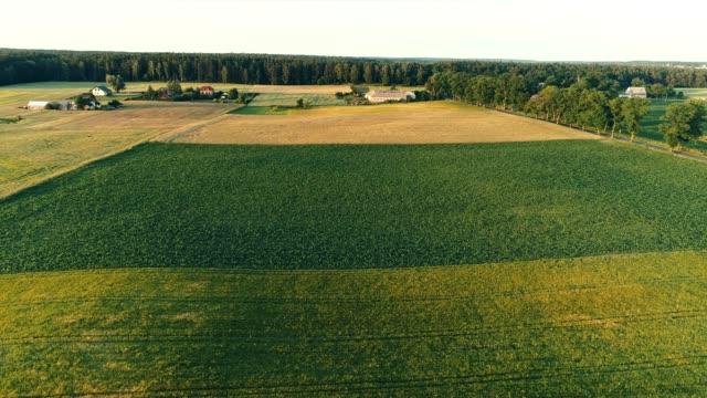 arazi geometrik alanlara ayrılmıştır. tarım - bölmek stok videoları ve detay görüntü çekimi