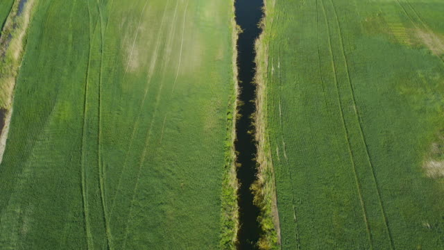 Land improvement or land amelioration concept, drone flying over narrow irrigation or drainage channels on rye or wheat field. Illustration of agriculture in the zone of risky agriculture. video