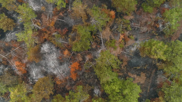 Land in ashes after fire from drone view video