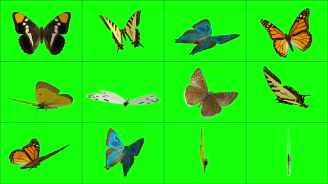 landed butterflies - butterfly stock videos and b-roll footage