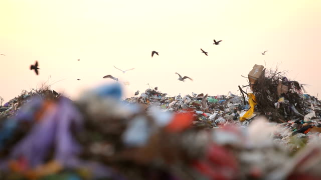 Landfill and birds video