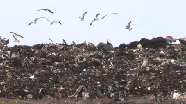 Landfill, County Dump video