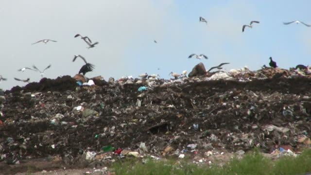 Landfill With Birds in High Definition video