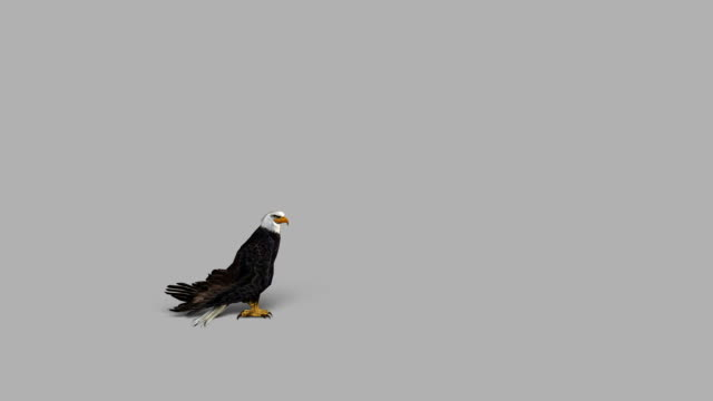 Landing Eagle with Alpha Channel (Loopable) Design Element eagle bird stock videos & royalty-free footage