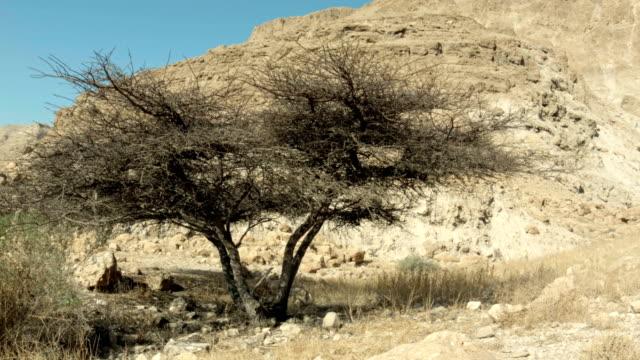 Landscape. Bare tree in the desert video