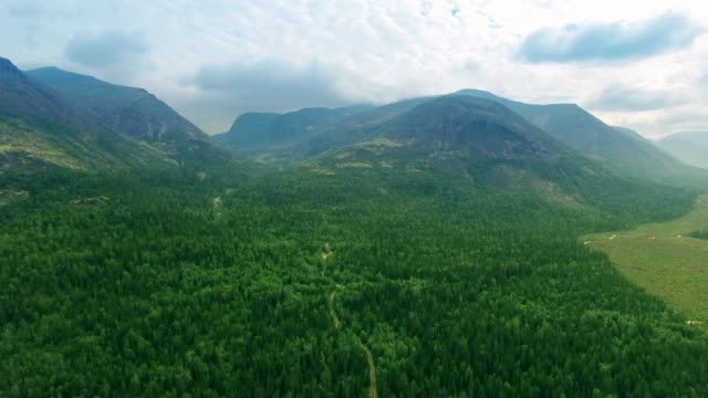 Landscape - forest and mountains video