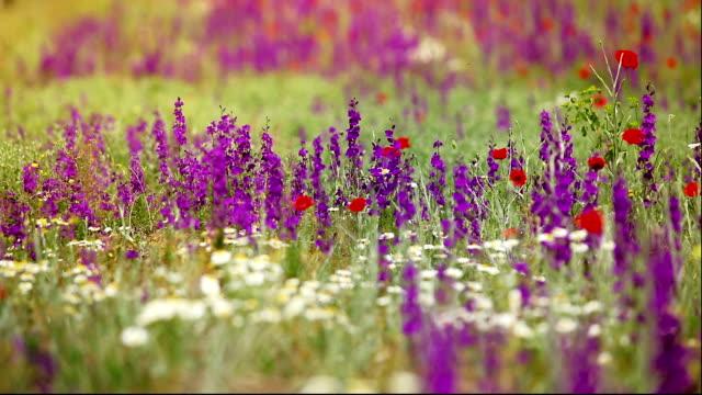 Landschaft von Wiesenblumen – Video