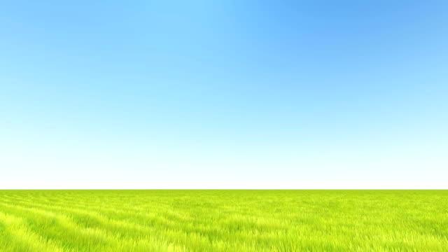 Grüne Landschaft Gras- und klaren Himmel – Video