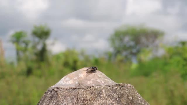 landscape insect fly nature - torace animale video stock e b–roll