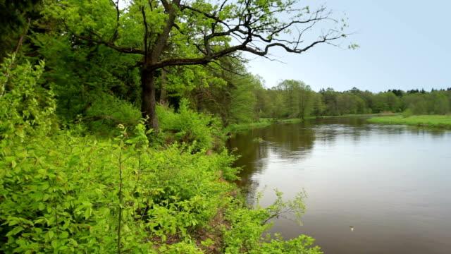 Krajobraz w pobliżu rzeki – film