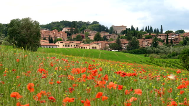 vídeos y material grabado en eventos de stock de paisaje de castiglione d ' orcia. - flor silvestre