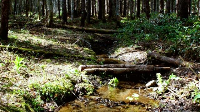 landskap av klar ström - hokkaido bildbanksvideor och videomaterial från bakom kulisserna