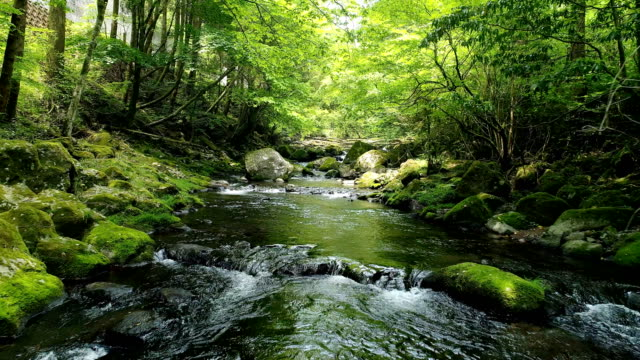 landscape of clear stream - video