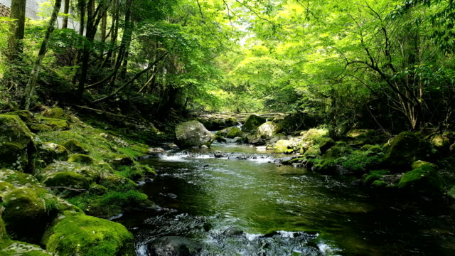 landscape of clear stream - landscape video stock e b–roll