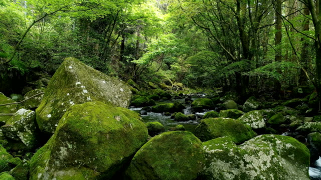 landscape of clear stream video