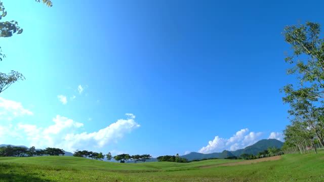 나무와 푸른 하늘, 시간 경과 잔디 필드의 풍경입니다. - 화창한 스톡 비디오 및 b-롤 화면