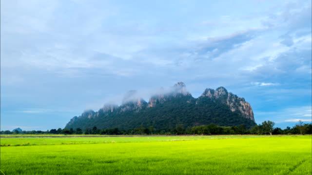 paesaggio di campi di riso verde. - cespuglio tropicale video stock e b–roll