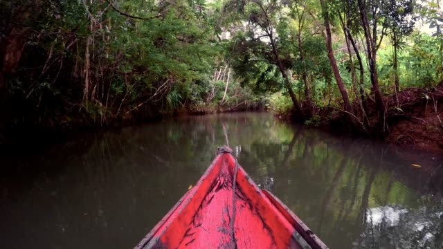 Landscape of Masoala National Park, Madagascar Beautiful pure nature landscape, Masoala National Park, small river in rainforest, Madagascar picturesque wilderness nature. Scenic view from boat canoe madagascar stock videos & royalty-free footage