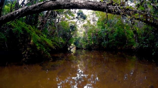 landskap av masoala nationalpark, madagaskar - madagaskar bildbanksvideor och videomaterial från bakom kulisserna