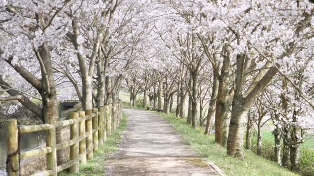 landscape of the cherry blossom landscape of the cherry blossom hovering stock videos & royalty-free footage