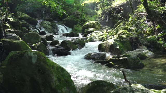 landscape of the clear stream - poco profondo video stock e b–roll