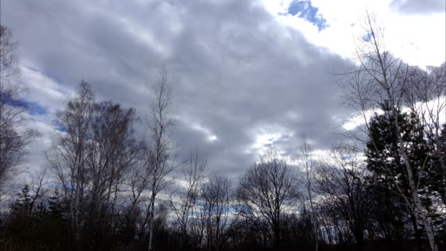 Landscape of the forest in early spring. Trees without leaves strongly wobble in the wind. Strong wind blows. Gray clouds swiftly sweep across the sky. Cloudy spring day. video