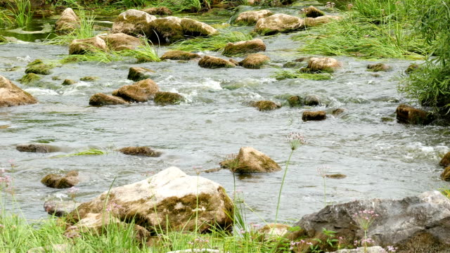landschaft des flusses mit steinen und schilf - rohrblattinstrument stock-videos und b-roll-filmmaterial