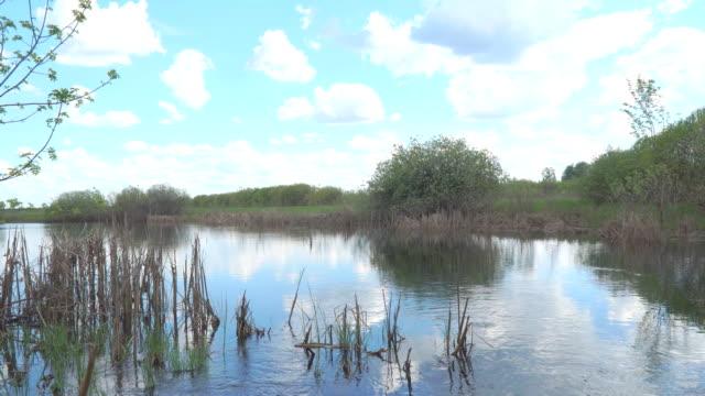 Landscape on a small pond video