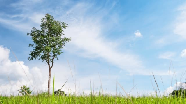 TIME LAPSE Landscape Single Tree with Background Cloud move on Blue Sky