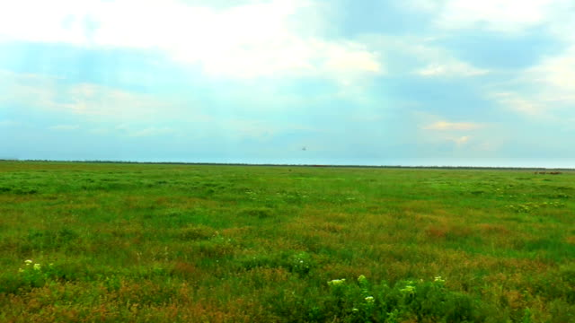 Landscape spring steppe Landscape spring steppe. We see an overcast sky, away animals and flying birds grass area stock videos & royalty-free footage