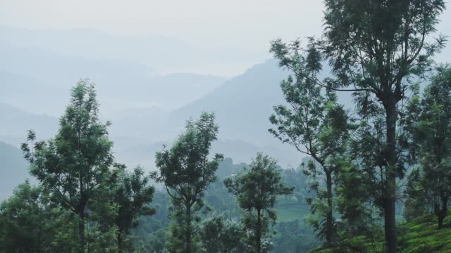 Landscape view of mountains and trees, on a moody and foggy day, in Munnar, India