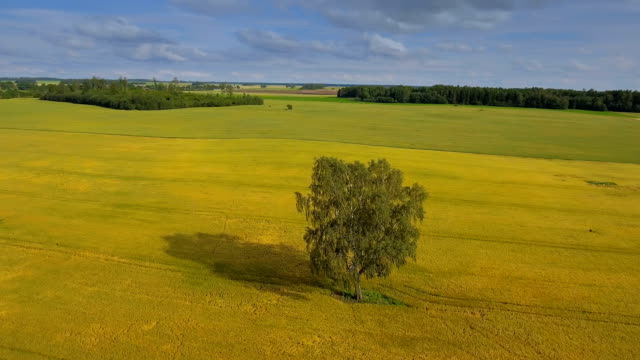 Landscape view of the cereal field video