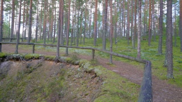 liggande vy av skogen med grottan i mitten - fur bildbanksvideor och videomaterial från bakom kulisserna
