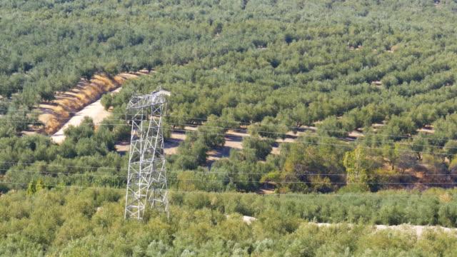 landscape view of the olive fields in the desert of spain - posizione corretta video stock e b–roll